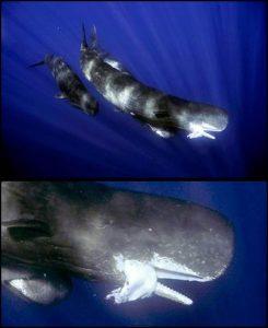 Mitos Kraken - Sang Penguasa Lautan 04